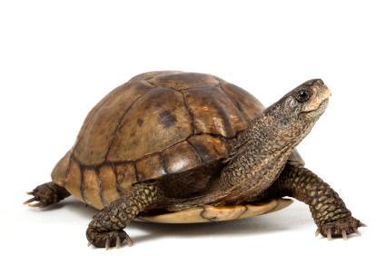 138292-425x282-Baby_turtle