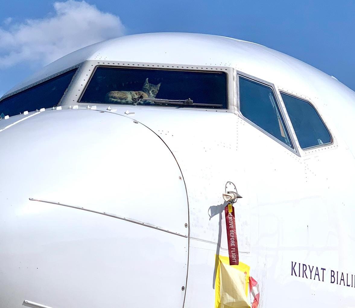 Cat Locked in Boeing 737 Cockpit
